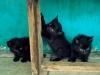 Kitten playing around at Bangar Market