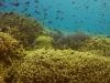 More coral, Sipadan