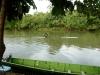 Tubing Temburong river