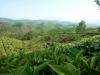 plantations2