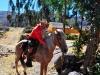 tom_horse