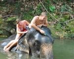 elephantAM